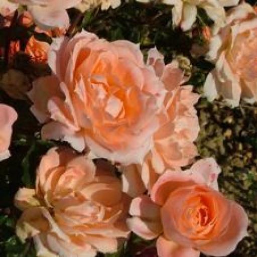 Flower Power - Potted OUT OF STOCK TILL NOVEMBER
