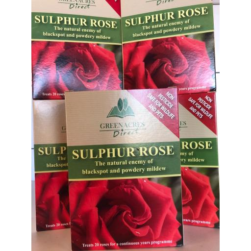 Sulphur Rose - Green Acres Direct