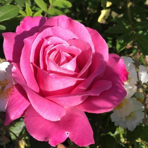 olivia rose.jpg