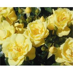 flowercarpetgold.jpg